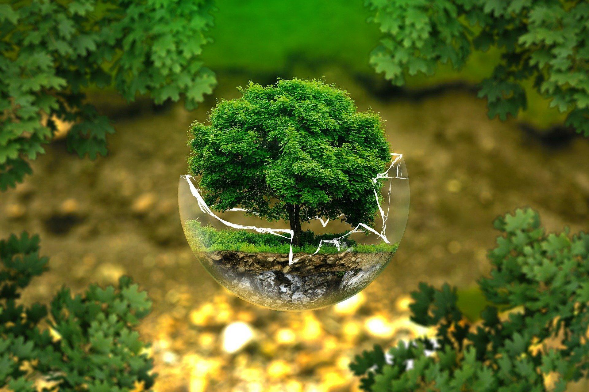 Webinar 6 luglio 2020 ore 9,15  - AZIENDA GREEN environmental-protection-326923_1920_5546_1.jpg (Art. corrente, Pag. 1, Foto logo)